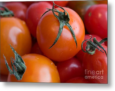 Tomatoes  Metal Print by A New Focus Photography