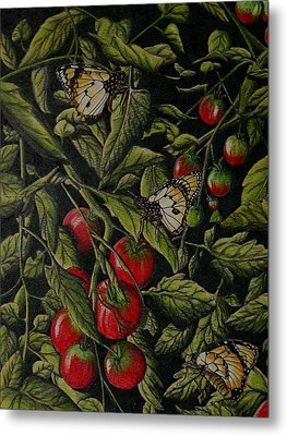 Tomatoes Metal Print by Joshua Armstrong