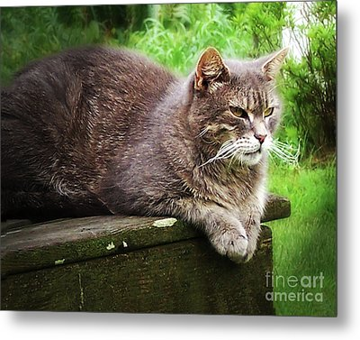 Metal Print featuring the photograph Top Cat by Pete Hellmann