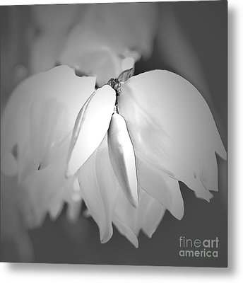 Top Of The Yucca Plant In Black And White Metal Print