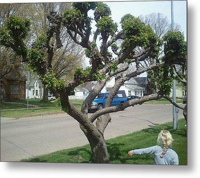 Topiary Pella Tree Metal Print
