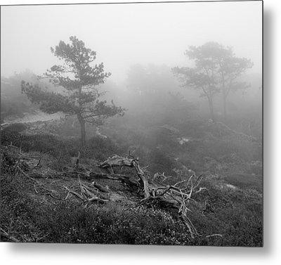 Torrey Pines In Fog Metal Print by Joseph Smith