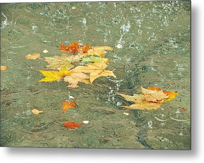 Tossed Leaves Metal Print by JAMART Photography