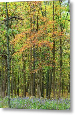 Touch Of Autumn Metal Print by Cedric Hampton