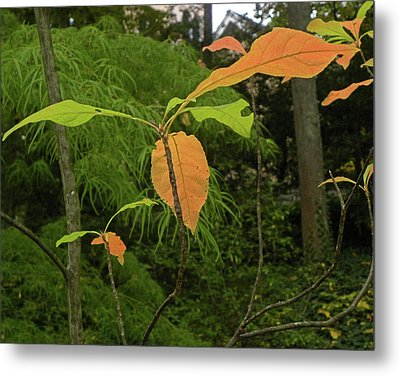 Metal Print featuring the photograph Touch Of Fall by Larry Bishop