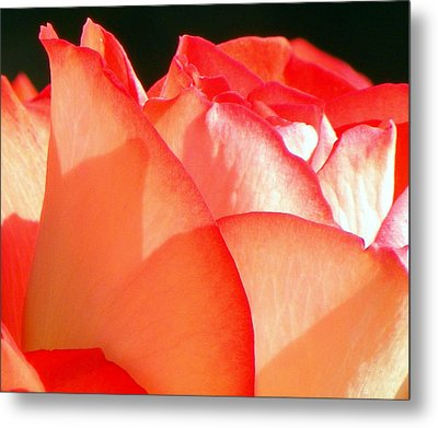 Touch Of Rose Metal Print by Karen Wiles