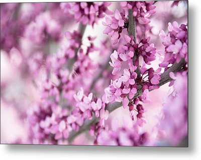 Touch Of Spring II Metal Print