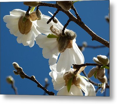 Touch Of Spring Metal Print by Jane Ford