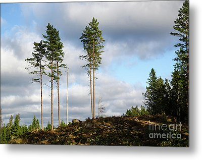 Metal Print featuring the photograph Towards The Sky by Kennerth and Birgitta Kullman