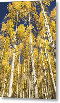 Metal Print featuring the photograph Towering Aspens by Phyllis Peterson