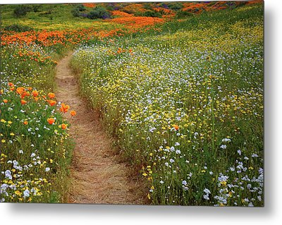 Metal Print featuring the photograph Trail Of Wildflowers At Diamond Lake In California by Jetson Nguyen