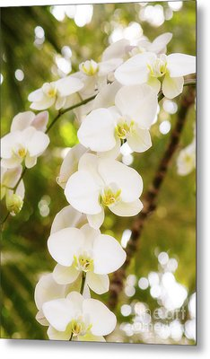 Trailing Orchids Metal Print by A New Focus Photography