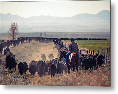 Trailing The Herd Metal Print