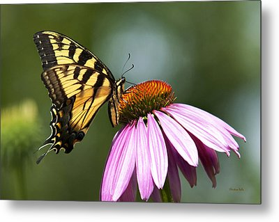 Tranquil Butterfly Metal Print by Christina Rollo