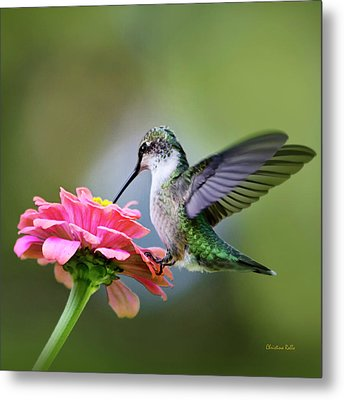 Tranquil Joy Hummingbird Square Metal Print