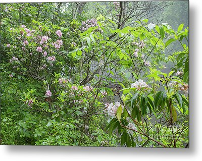 Metal Print featuring the photograph Tranquil Nature by Chris Scroggins