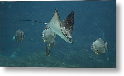 Tranquil Sea Creatures Metal Print by Betsy Knapp