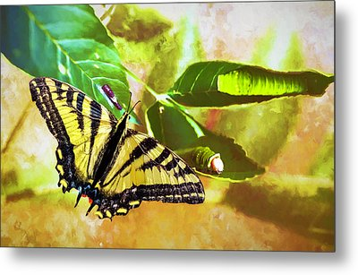 Metal Print featuring the photograph Transformation  by Diane Schuster