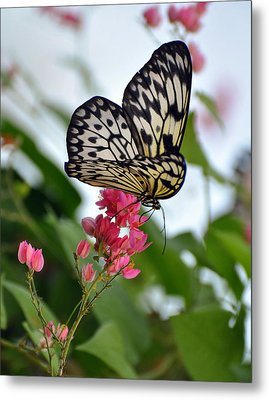 Translucent Butterfly Metal Print by Marty Koch