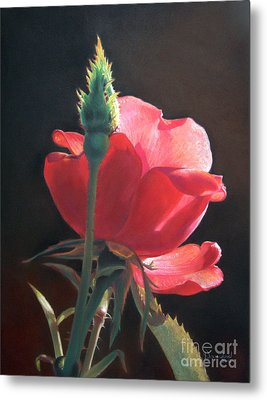 Translucent Rose Metal Print by Nanybel Salazar