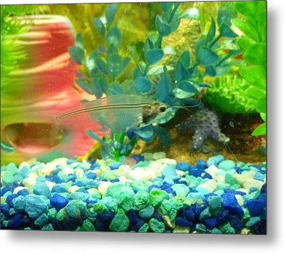 Transparent Catfish Metal Print