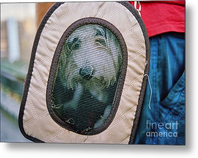Metal Print featuring the photograph Travel Dog by Dean Harte