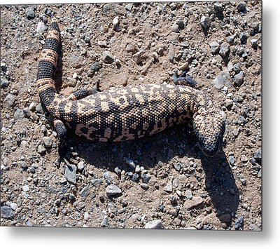 Traveler The Gila Monster Metal Print