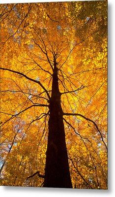 Tree Aflame Metal Print by Linda Unger