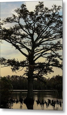 Tree Against The Sky Metal Print