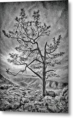 Metal Print featuring the photograph Tree And Rocks In The Blue Ridge Near Sunset Bw by Dan Carmichael
