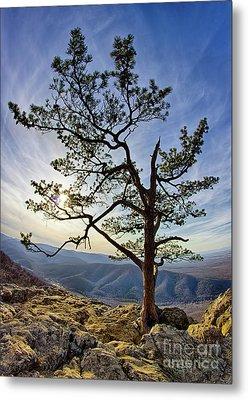 Tree And Rocks In The Blue Ridge Near Sunset Metal Print by Dan Carmichael