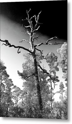 Metal Print featuring the photograph Tree At Halpatiokee by Don Youngclaus
