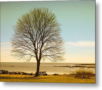Tree At New Castle Common Metal Print by Nancy De Flon