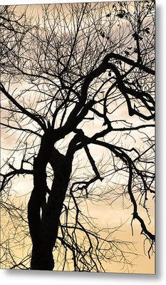 Tree At Sunrise Metal Print by Rose  Hill