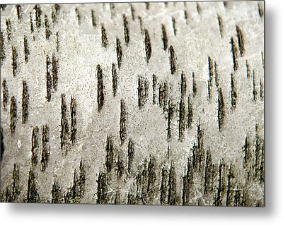 Metal Print featuring the photograph Tree Bark Abstract by Christina Rollo