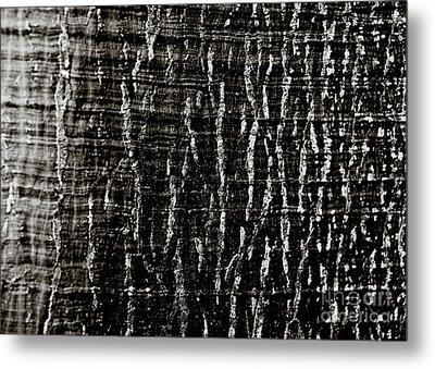Tree Bark Metal Print by Charmian Vistaunet