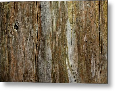 Tree Bark Textures And Hues Metal Print