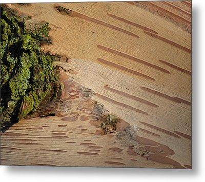 Tree Bark With Lichen Metal Print