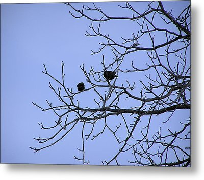 Tree Birds And Sky Metal Print by Richard Mitchell