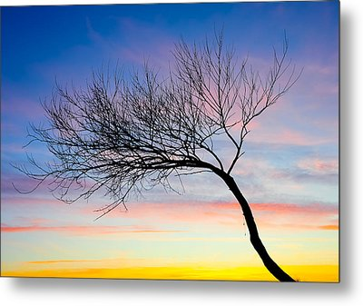 Tree Branches Metal Print by Svetlana Sewell