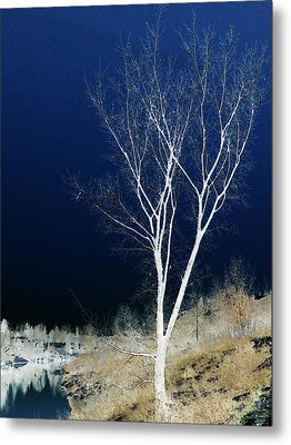 Metal Print featuring the photograph Tree By Stream by Stuart Turnbull