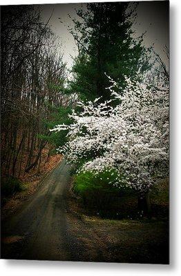 Tree By The Road Metal Print by Joyce Kimble Smith