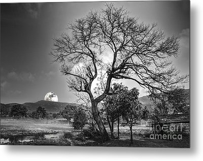 Tree Metal Print by Charuhas Images