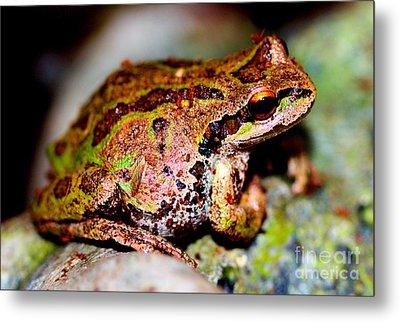 Tree Frog Close Up Metal Print by Nick Gustafson