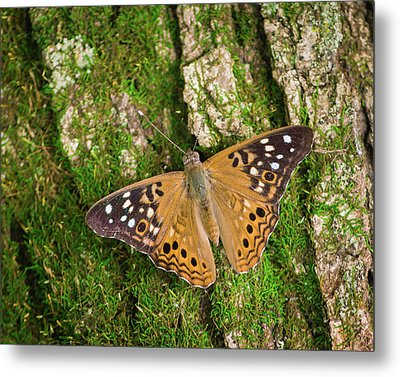 Metal Print featuring the photograph Tree Hugger by Bill Pevlor
