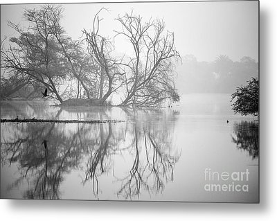 Tree In A Lake Metal Print by Pravine Chester