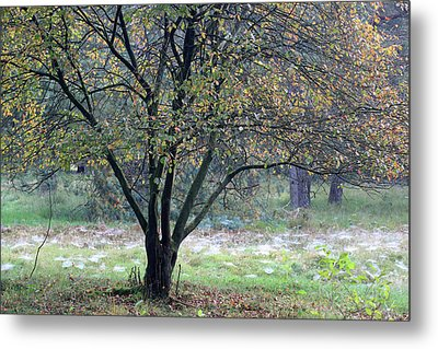 Tree In Forest With Autumn Colors Metal Print