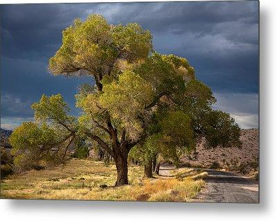 Tree In Nevada Metal Print