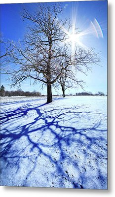 Metal Print featuring the photograph Tree Light by Phil Koch