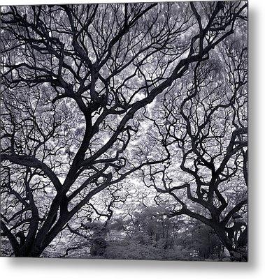 Tree Lightening Metal Print by Sean Davey